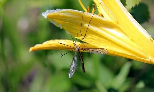 Mosquitos, ticks