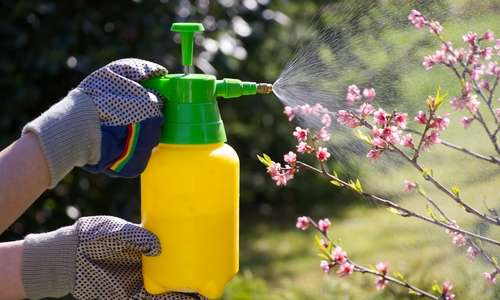 Latinos and Pesticide