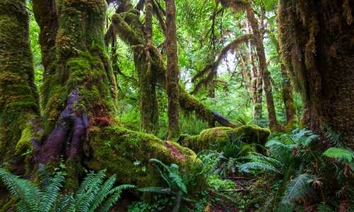 Rainforest Drug Study